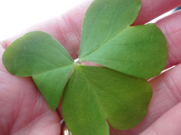 luckoftheirish