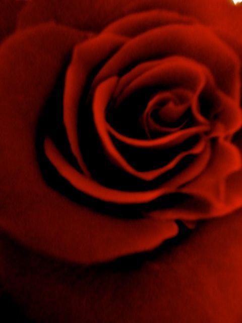 rose:me