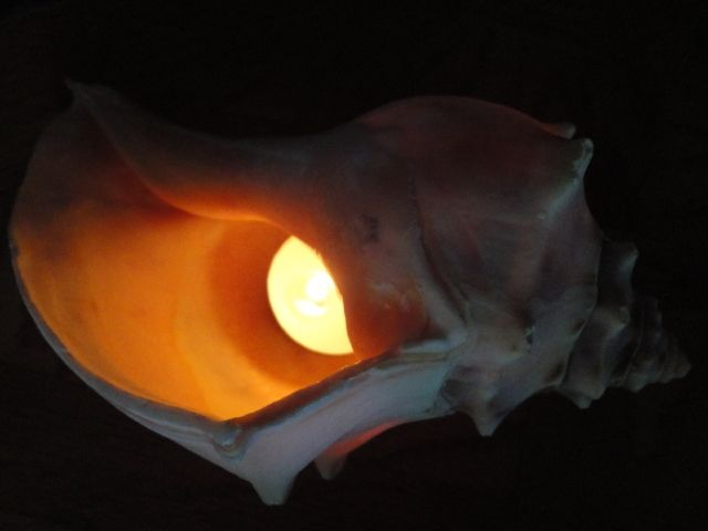 lightconch