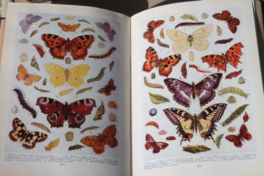 shabby-antique-beautifully-illustrated-Books-of-Knowledge-library-1930-20-volume-set-Laurel-Leaf-Farm-item-no-z31810-9